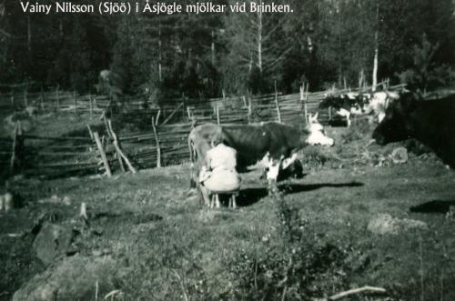 Vainy Nilsson i Åsjögle mjölkar vid Brinken